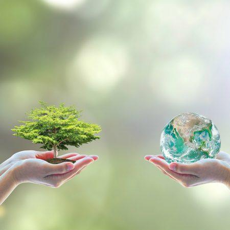 Natural environment: Habitat and biodiversity