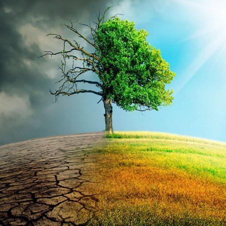 Ecology: Abiotic elements