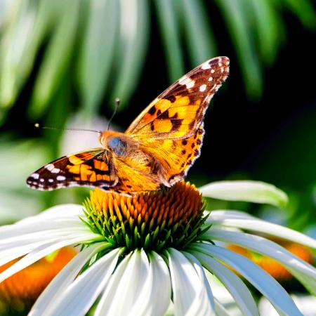 Medio natural: Clasificación de fauna y flora